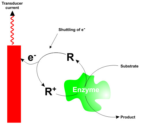Elextrical communication via application of artificial redox mediators. Source: Enzyme Electrodes.