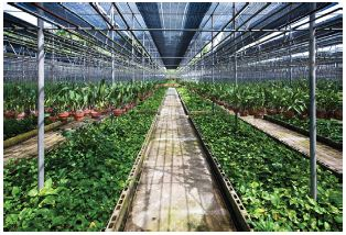 Monitoring Carbon Dioxide Levels In Greenhouses And