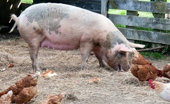 CO2 Monitoring in Poultry and Pig Processing