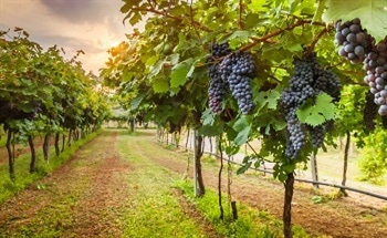 The Importance of Measuring CO2 in Wine Production
