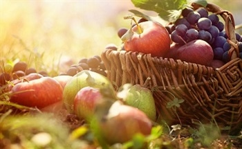 Improving the Conservation and Ripening of Fruits Using CO2 Monitoring