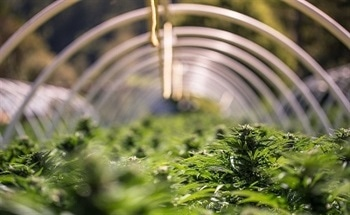 Optimal Marijuana Crop Growth Using Gas Sensing