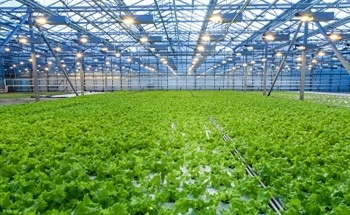 Monitoring Carbon Dioxide Levels in Greenhouses and Controlled Environment Horticulture Spaces
