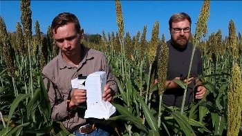 Hyperspectral Imaging Device Accurately Detects Changes in Plant Health